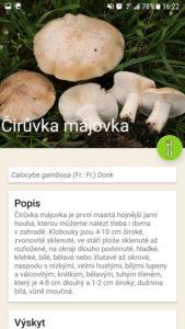 Podrobné informace o houbě